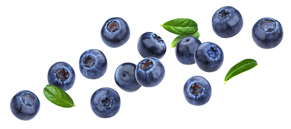 Menu Fresh blueberries
